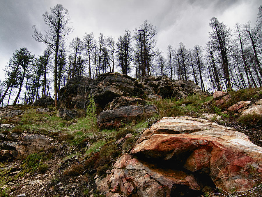 Rocks Photograph - Rocks And Trees 2 by Trever Miller