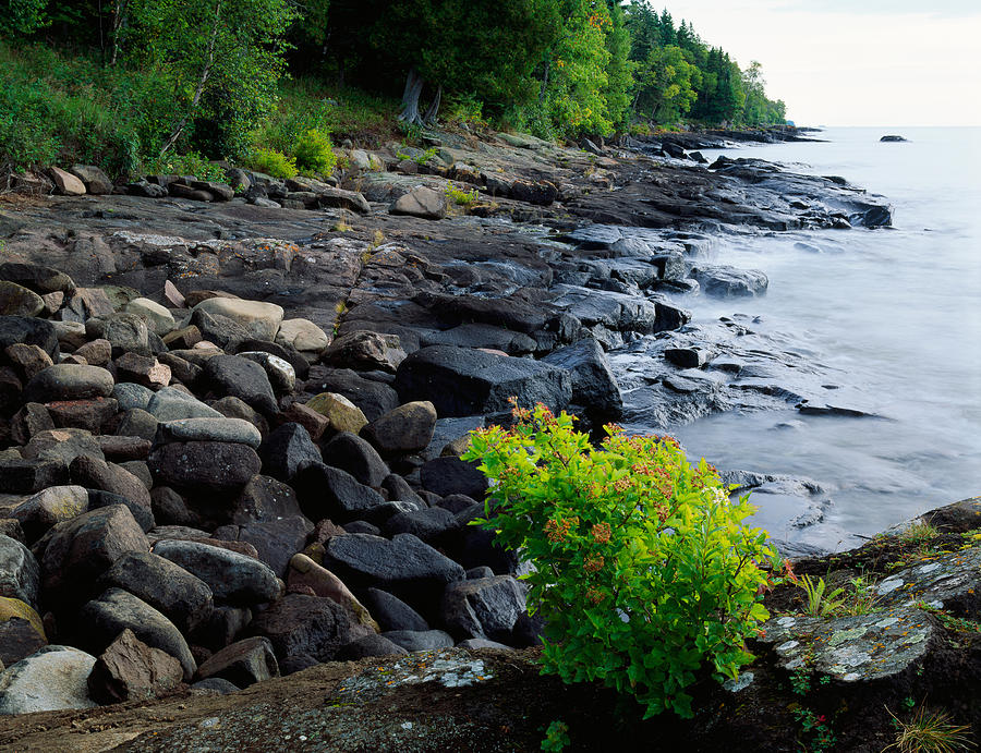 Color Image Photograph - Rocks And Trees Along Lake Superior by Panoramic Images