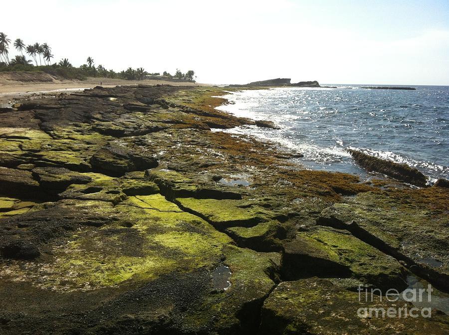 Ocean Photograph - Rocks In Puerto Rico by Sean Hughes