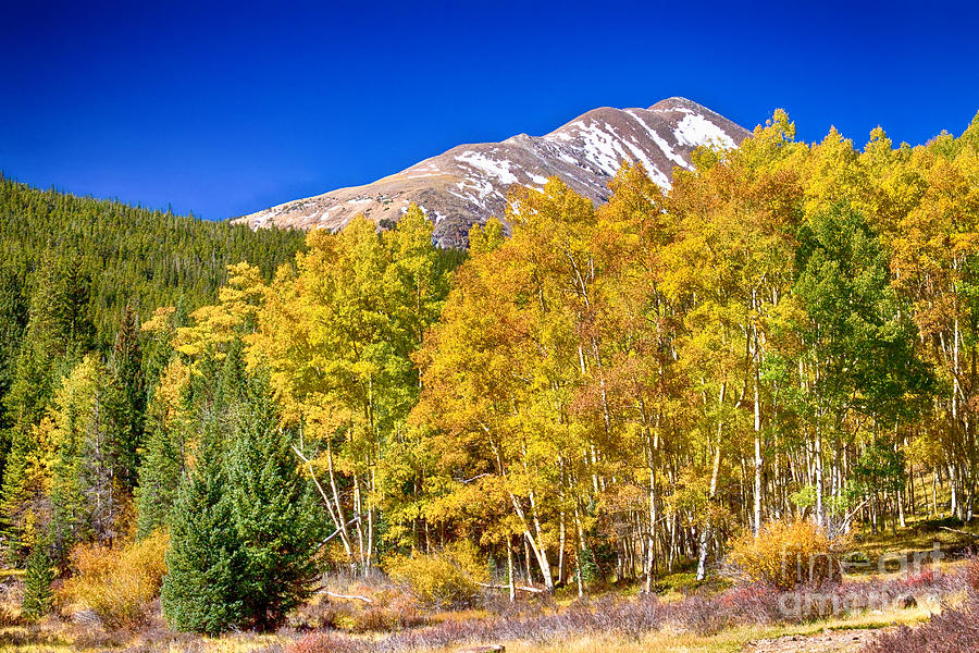 Autumn Photograph - Rocky Mountain Autumn Bonanza by James BO  Insogna