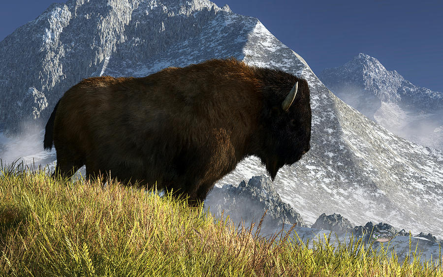 Bison Digital Art - Rocky Mountain Buffalo by Daniel Eskridge