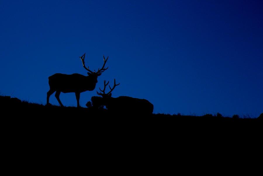 Elk Photograph - Rocky Mountain Elk by Jeff Nelson