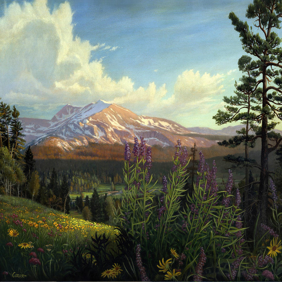 Rocky Mountain Landscape Meadow In Spring Western Panorama
