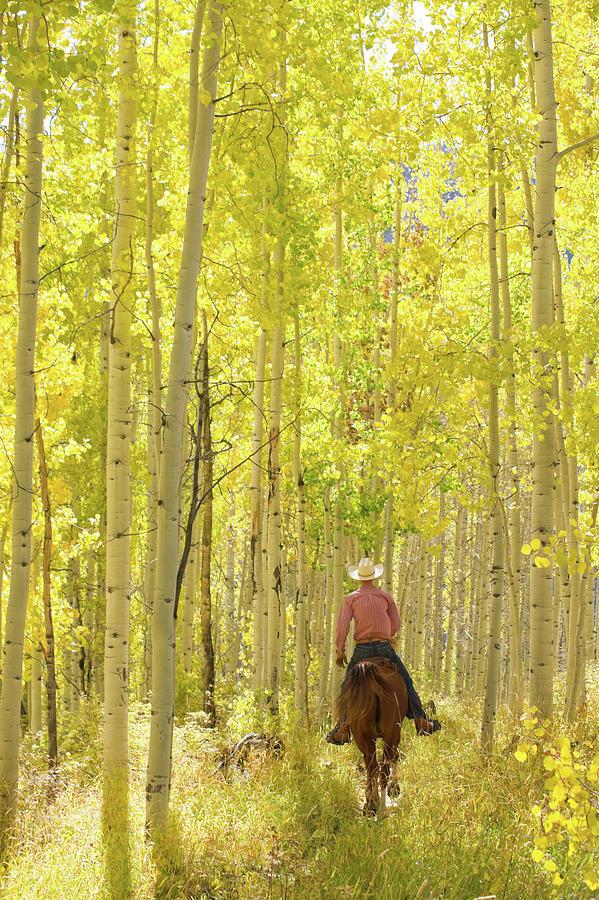 Rocky Mountain Lifestyle Photograph by Amygdala imagery