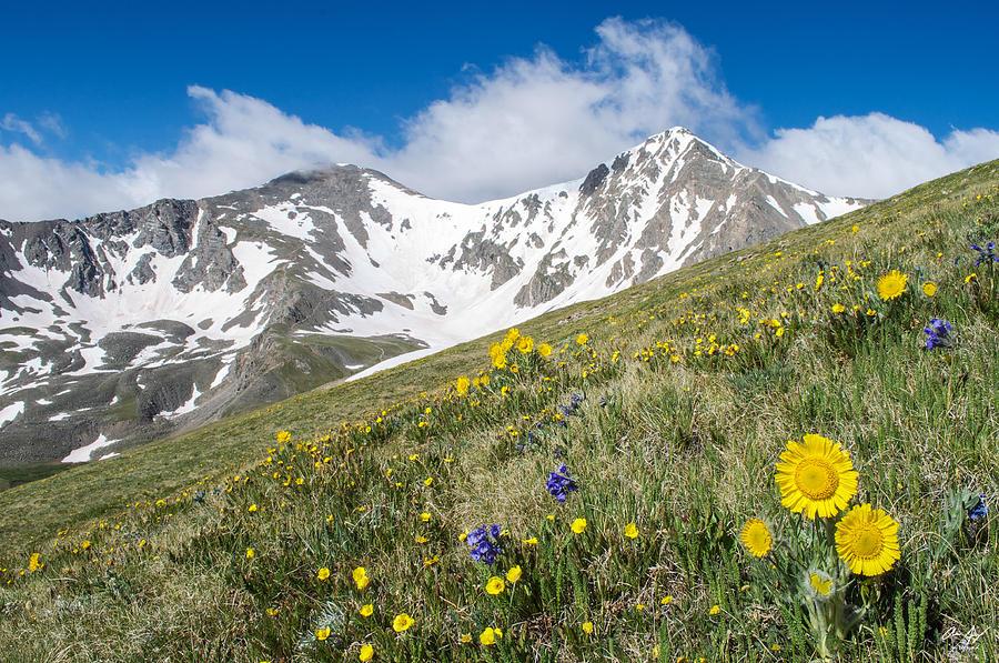 Grays Photograph - Rocky Mountain Springtime by Aaron Spong