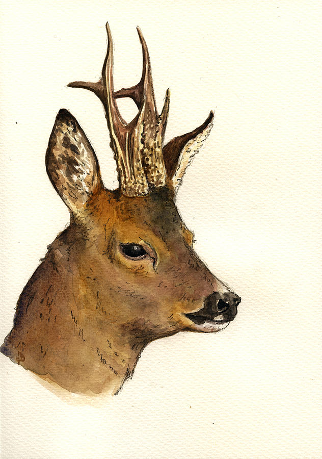 Roe Deer Head Study Painting By Juan Bosco