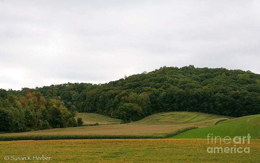 Trees Photograph - Rolling Fields by Susan Herber