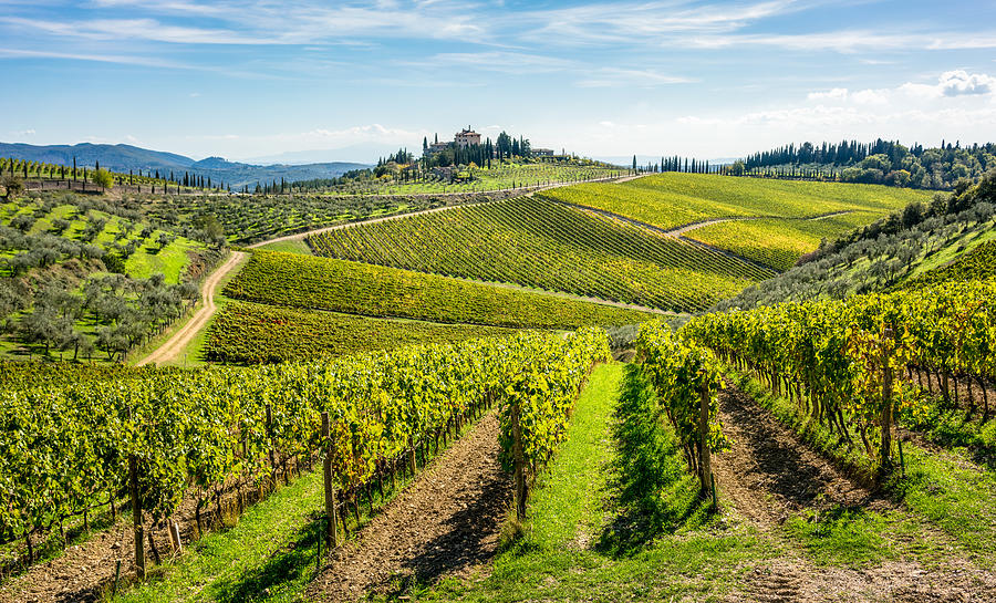 Rolling Hills Of Tuscan Vineyards In The Chianti Wine Region Photograph by Georgeclerk