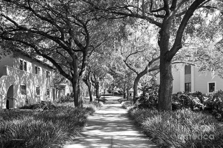 Rollins College Photograph - Rollins College Landscape by University Icons