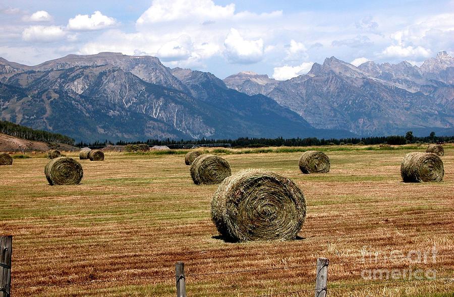 Rolls of Hay by Jim Goodman
