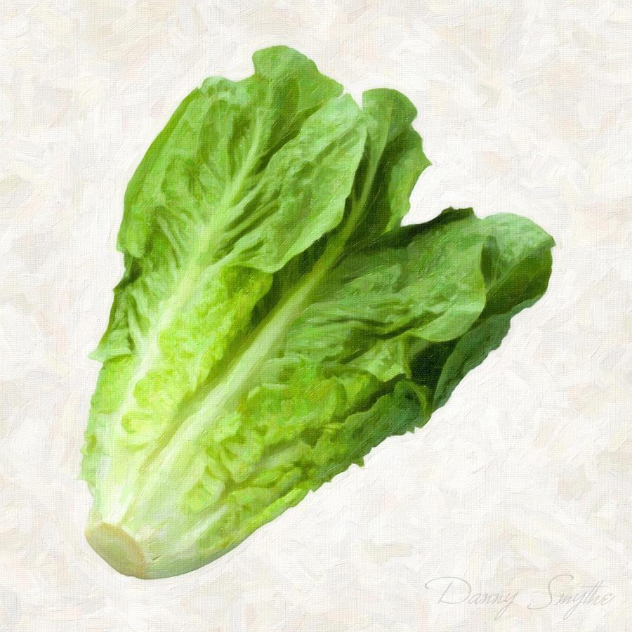 Lettuce Painting - Romain Lettuce  by Danny Smythe