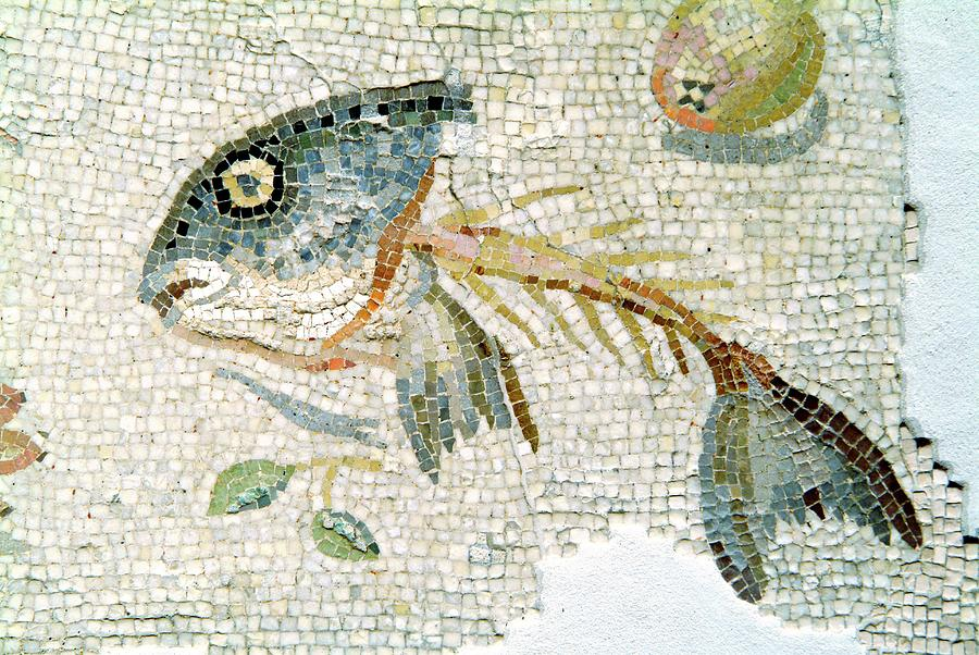 Mosaic Photograph - Roman Mosaic by Pasquale Sorrentino/science Photo Library