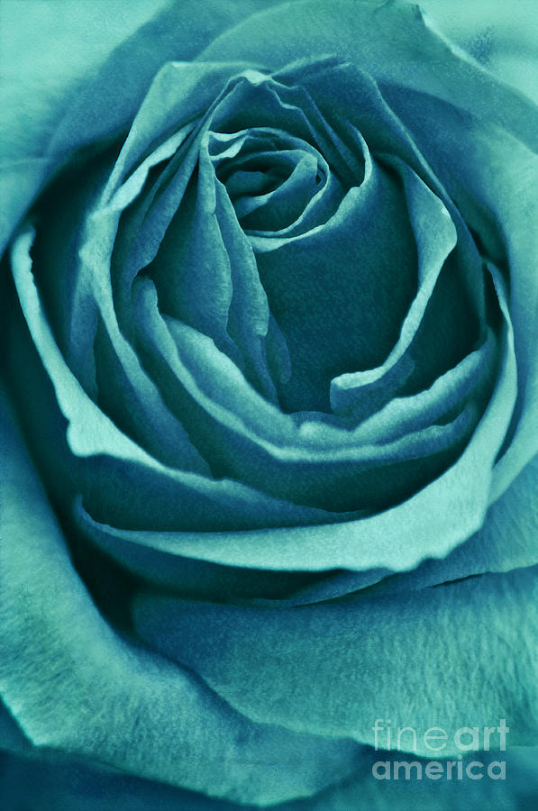 Rose Photograph - Romance II by Angela Doelling AD DESIGN Photo and PhotoArt