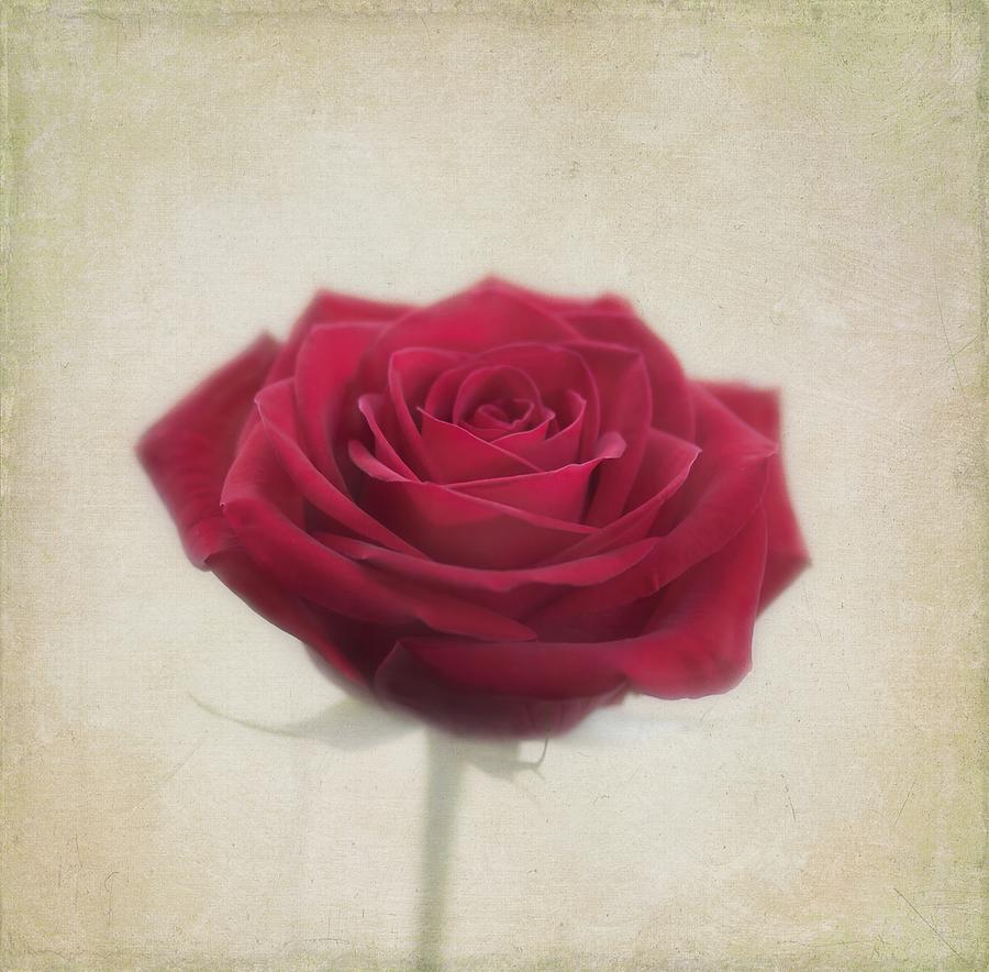 Rose Photograph - Romance by Kim Hojnacki