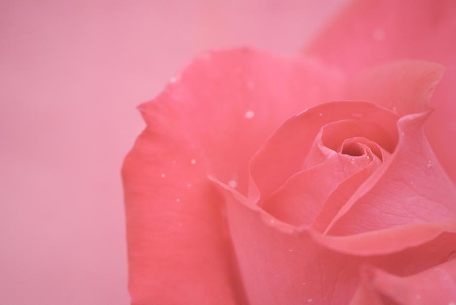 Pink Photograph - Romance by Lisa Knechtel