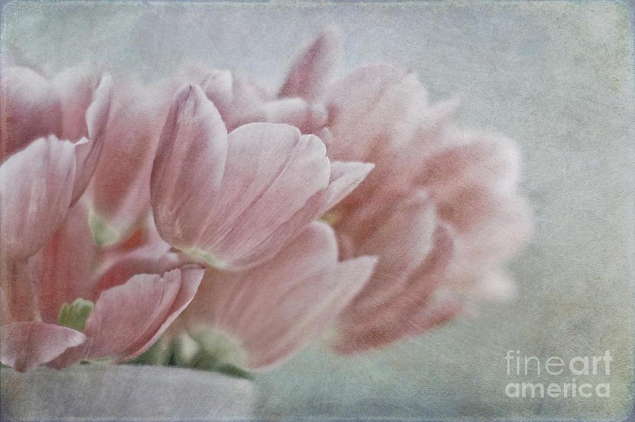 Romance Of Spring Photograph