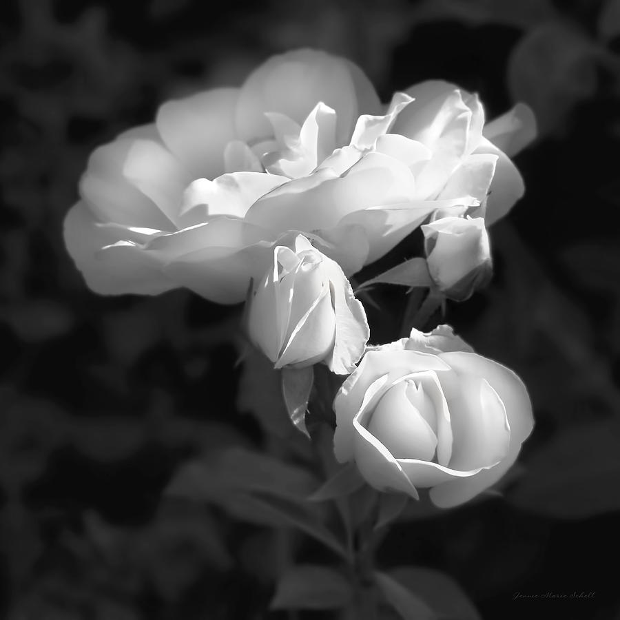 Romantic roses black and white