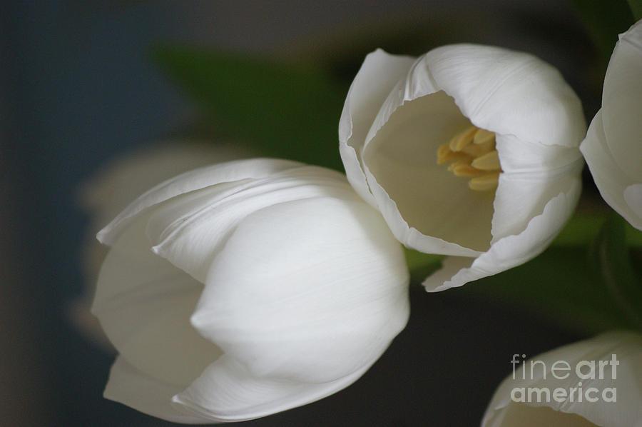 Romantic Photograph - Romantic White by Carol Lynch