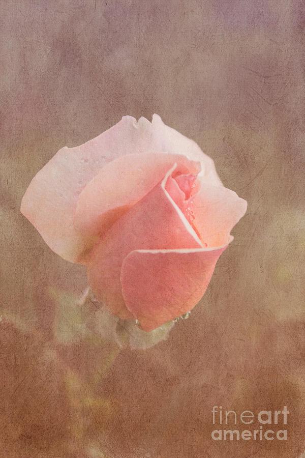 Pink Photograph - Romatic by Arlene Carmel