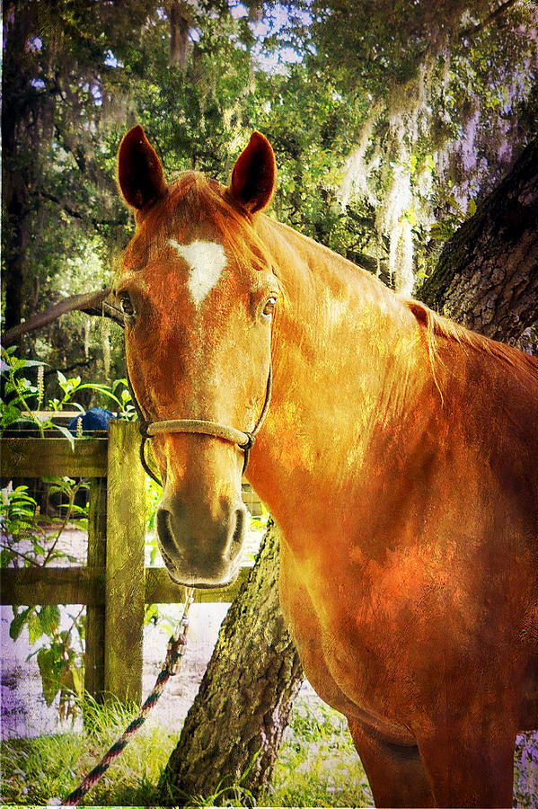 Horse Photograph - Romeo by Judy Hall-Folde