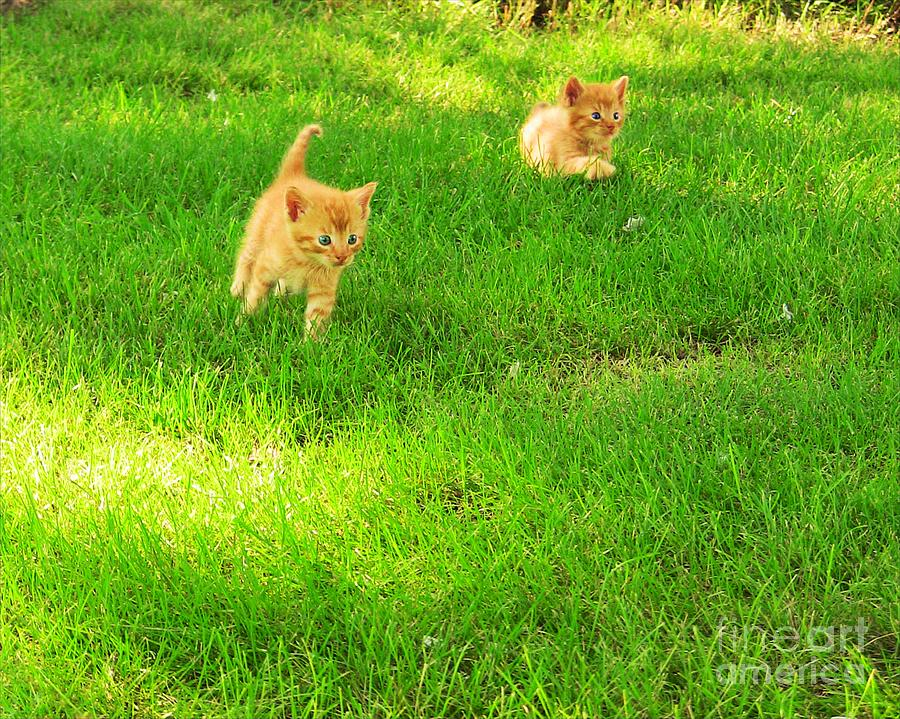 Cats Photograph - Romping Kittens by Pet Serrano