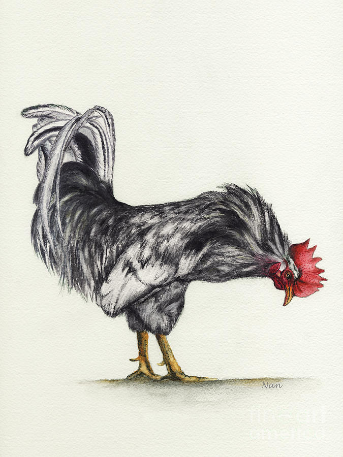 Roosters Painting - Rooster by Nan Wright