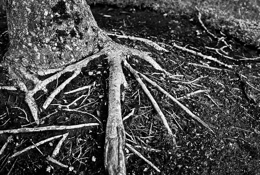 Roots by Anna Burdette
