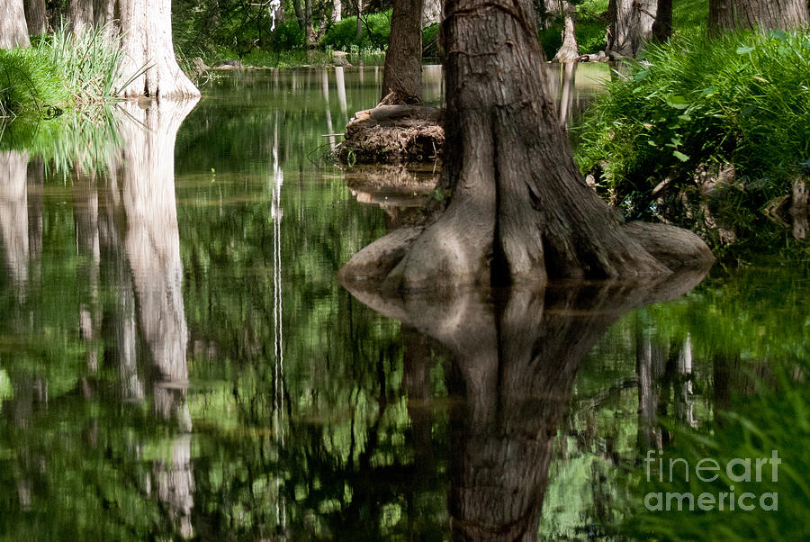 Landscape Photograph - Roots by Barbara Shallue