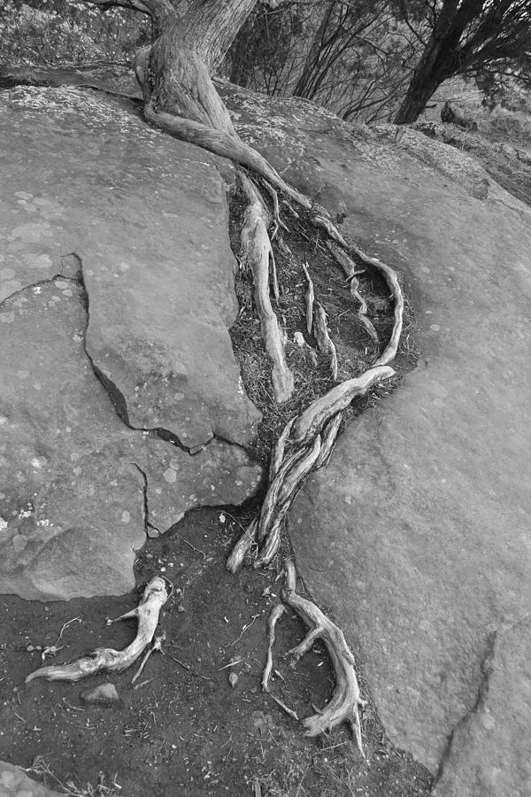 Garden Of The Gods Photograph - Roots I by Bill Mock