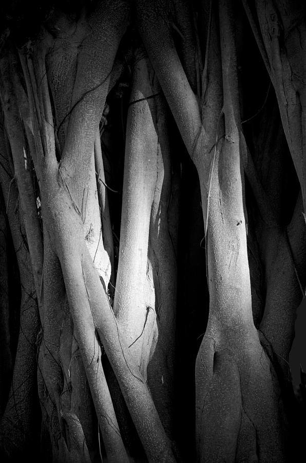 Roots Photograph by Nancy Edwards