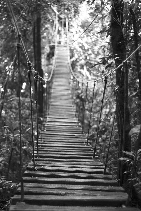 Rope Bridge in Costa Rica's Cloud Forest by Christopher Kulfan