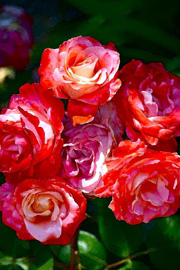 Floral Photograph - Rose 124 by Pamela Cooper
