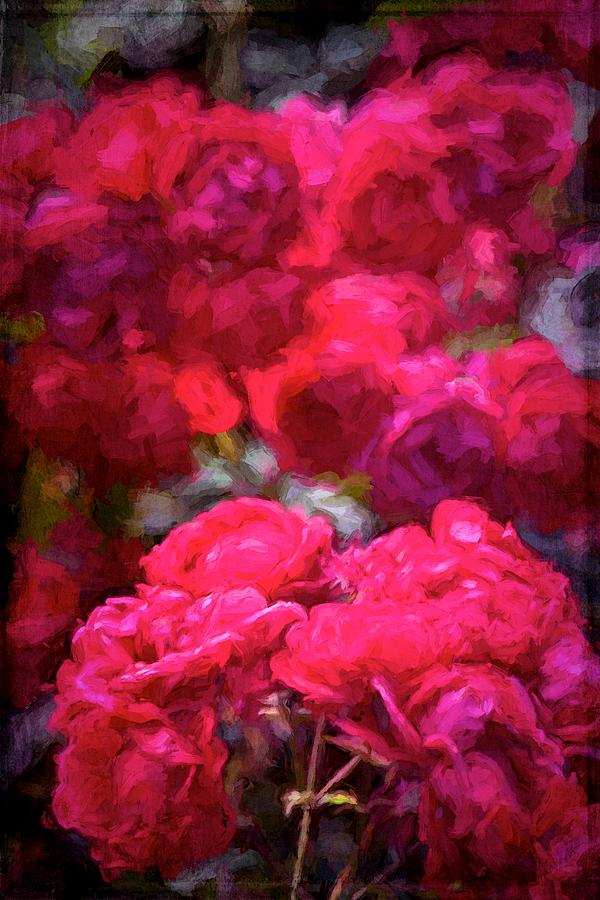 Floral Photograph - Rose 134 by Pamela Cooper