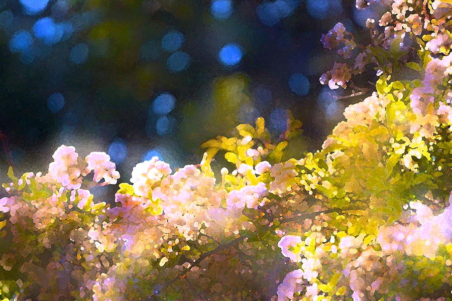 Floral Photograph - Rose 183 by Pamela Cooper