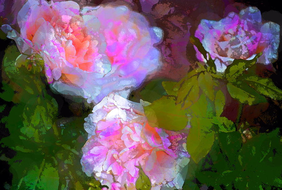 Floral Photograph - Rose 184 by Pamela Cooper