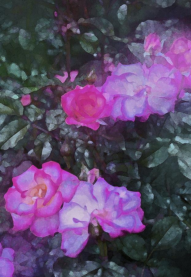 Floral Photograph - Rose 189 by Pamela Cooper