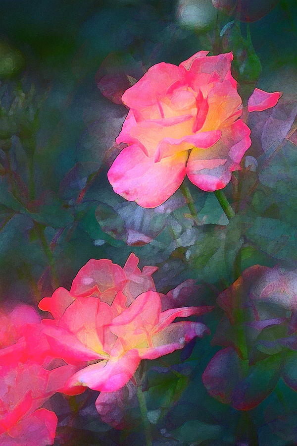 Floral Photograph - Rose 194 by Pamela Cooper