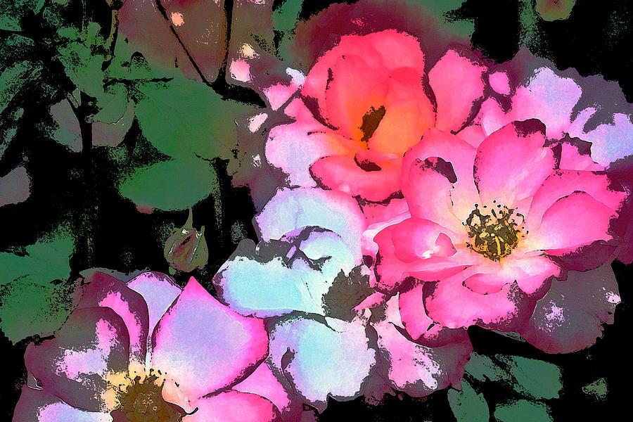 Floral Photograph - Rose 197 by Pamela Cooper