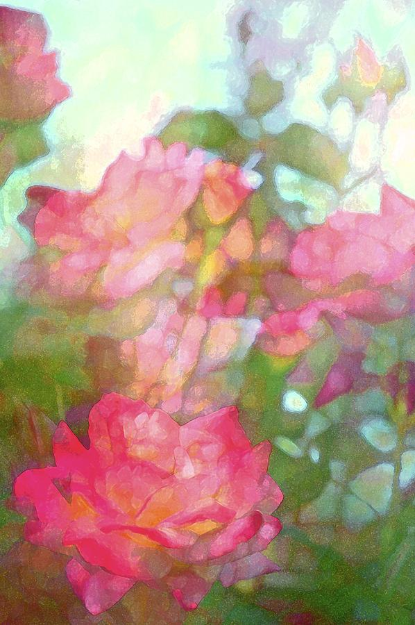 Floral Photograph - Rose 200 by Pamela Cooper