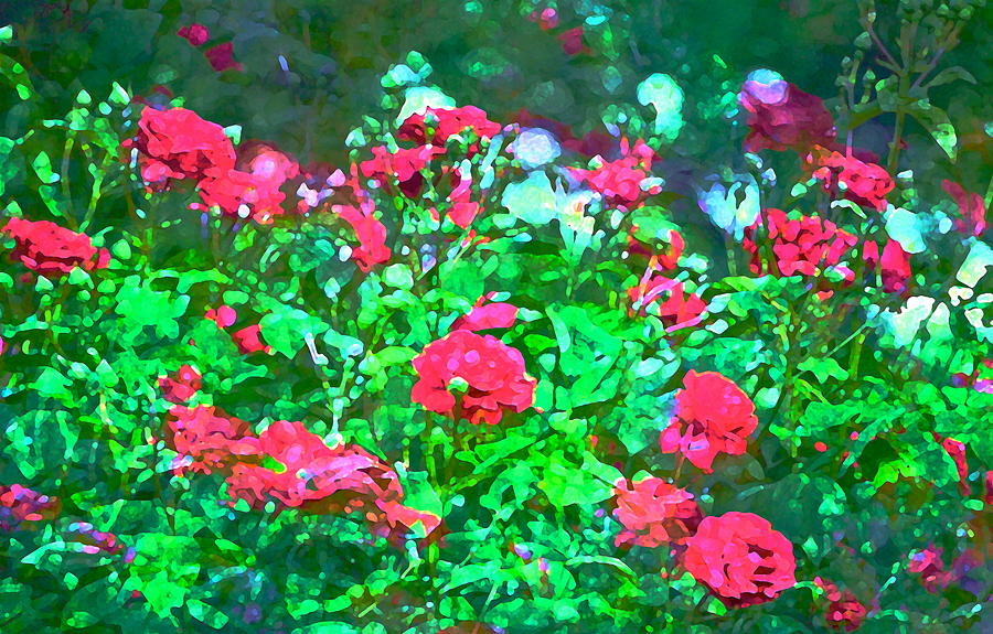 Floral Photograph - Rose 201 by Pamela Cooper