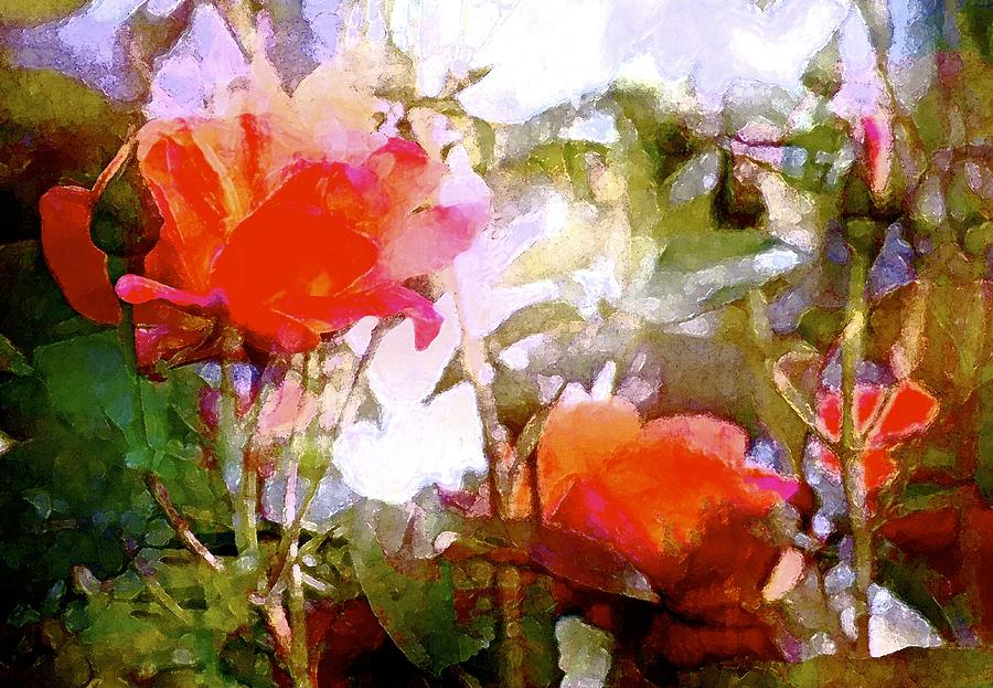 Floral Photograph - Rose 204 by Pamela Cooper
