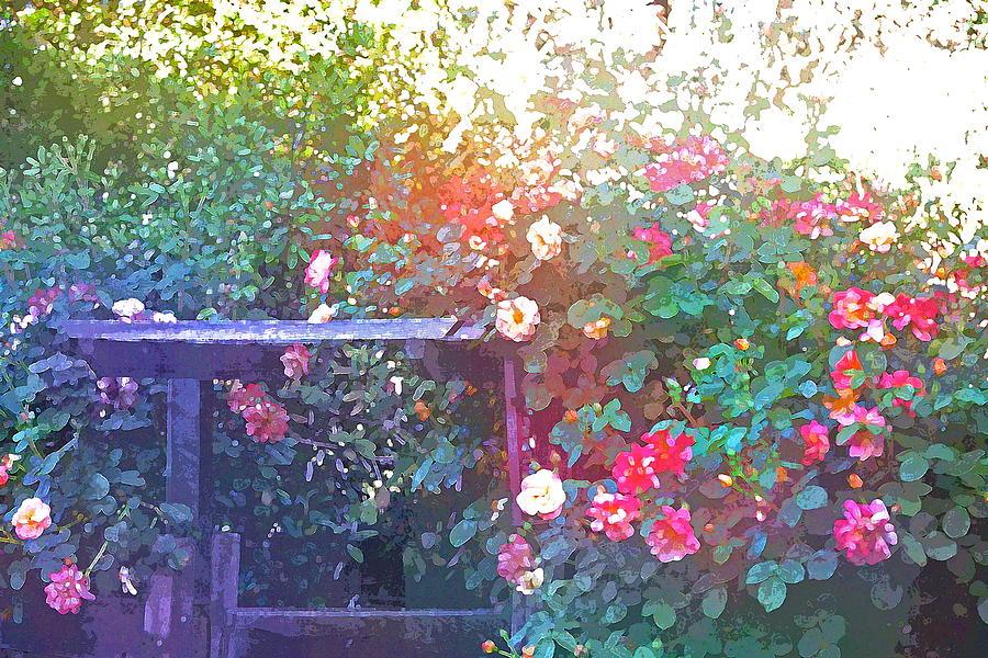 Floral Photograph - Rose 205 by Pamela Cooper