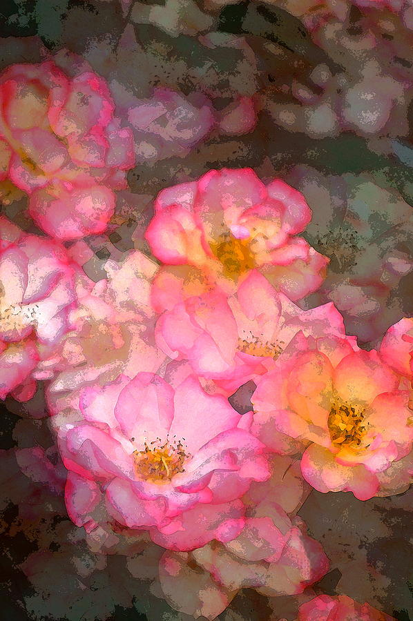 Floral Photograph - Rose 210 by Pamela Cooper
