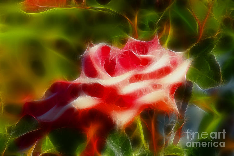 Flower Photograph - Rose 6168-fractal by Gary Gingrich Galleries