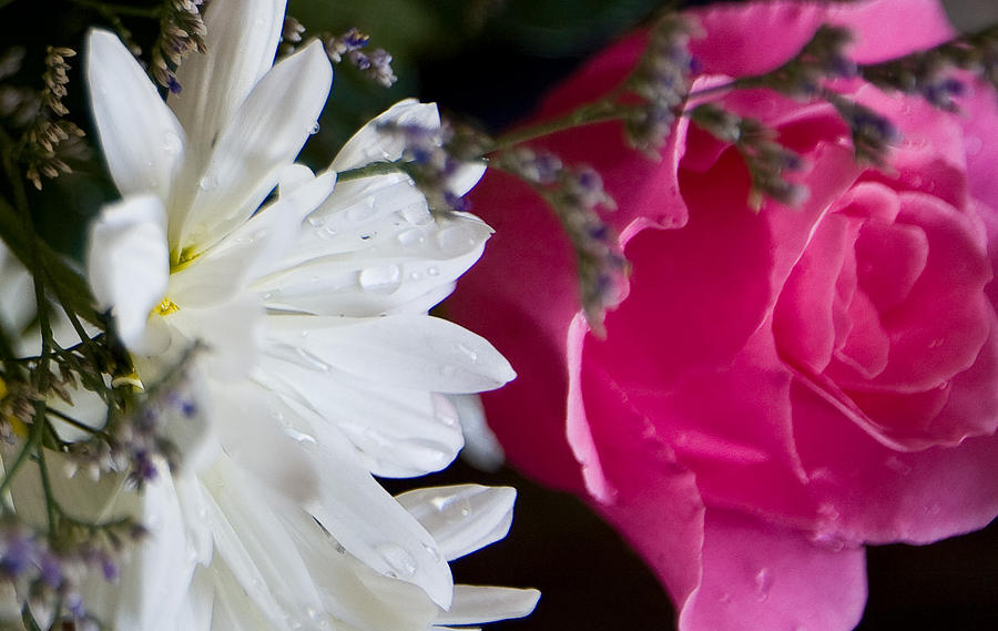Flower Photograph - Rose And Daisy by John Holloway