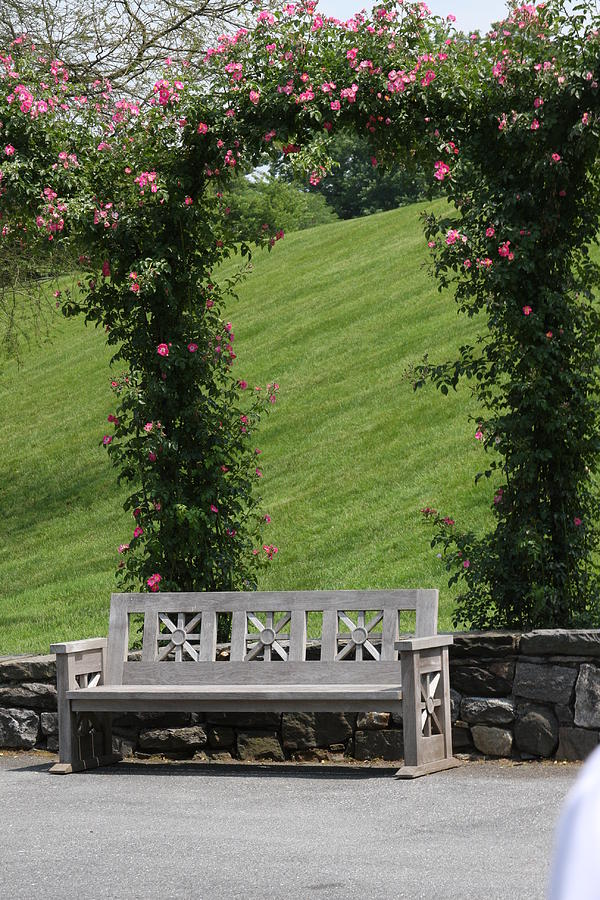 Rose Photograph - Rose Arch At Longwood Gardens by Vadim Levin