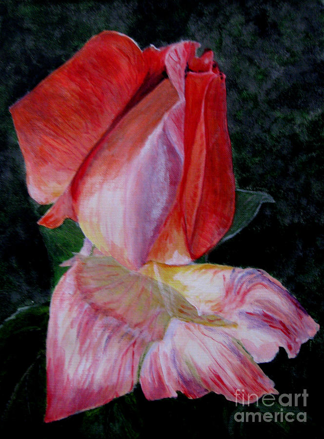 Rose Painting - Rose Bud by Nancie Johnson