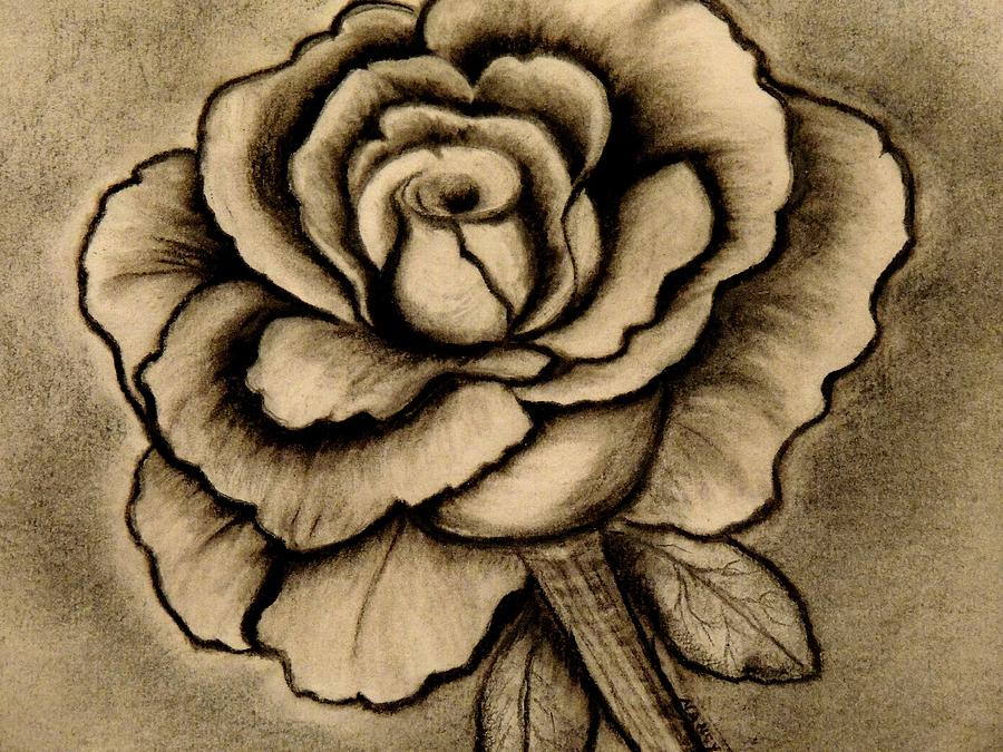 It's just an image of Luscious Charcoal Rose Drawing