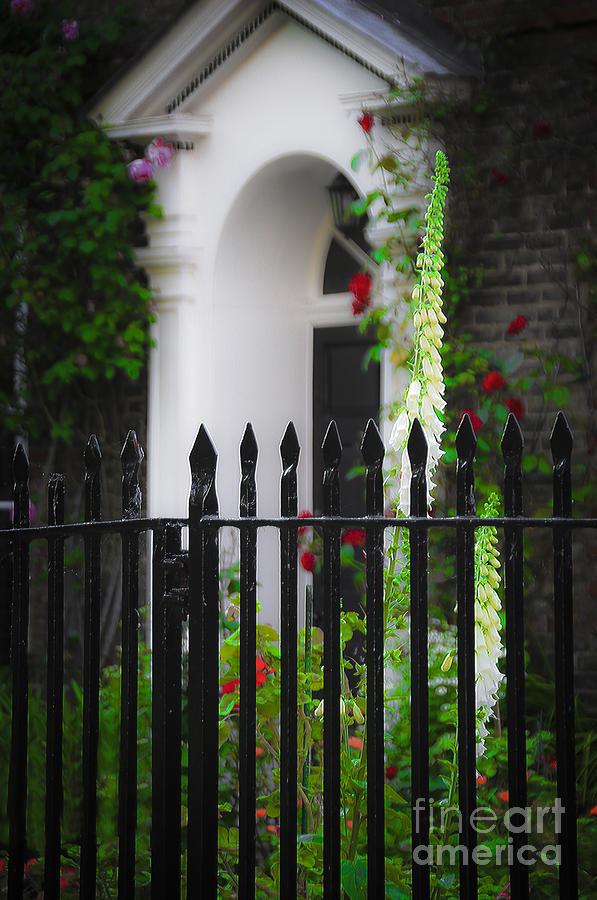 Ken Photograph - Rose Garden by Ken Johnson