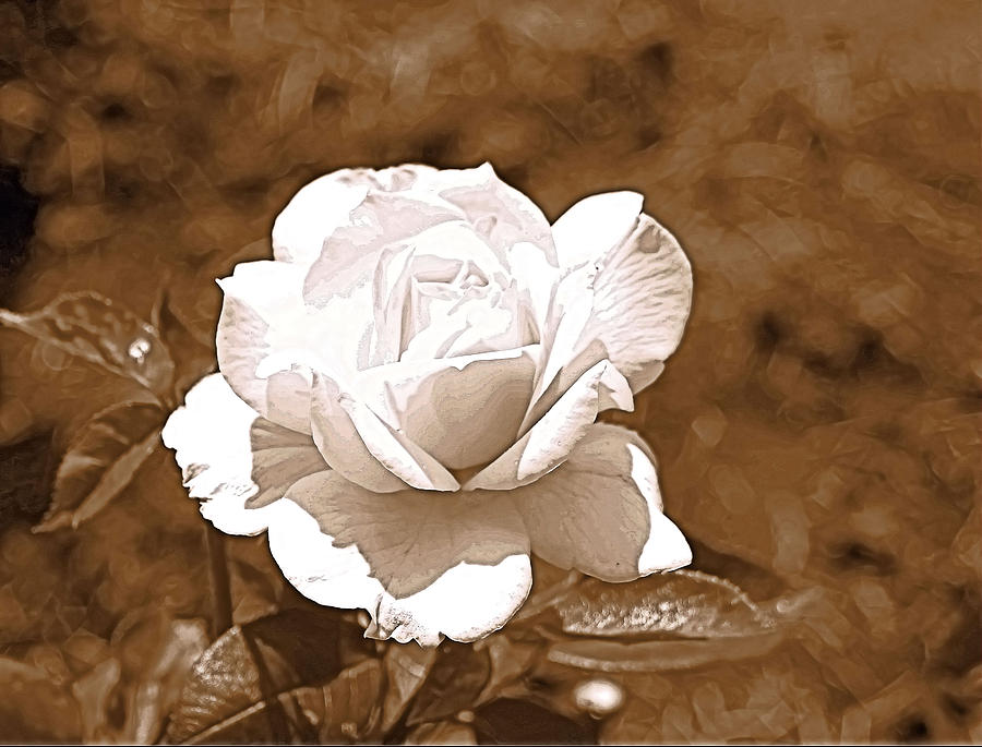 Sepia Mixed Media - Rose In Sepia by Victoria Sheldon